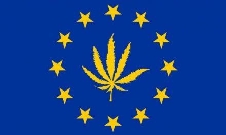 Európa lesz a világ legnagyobb kannabisz piaca