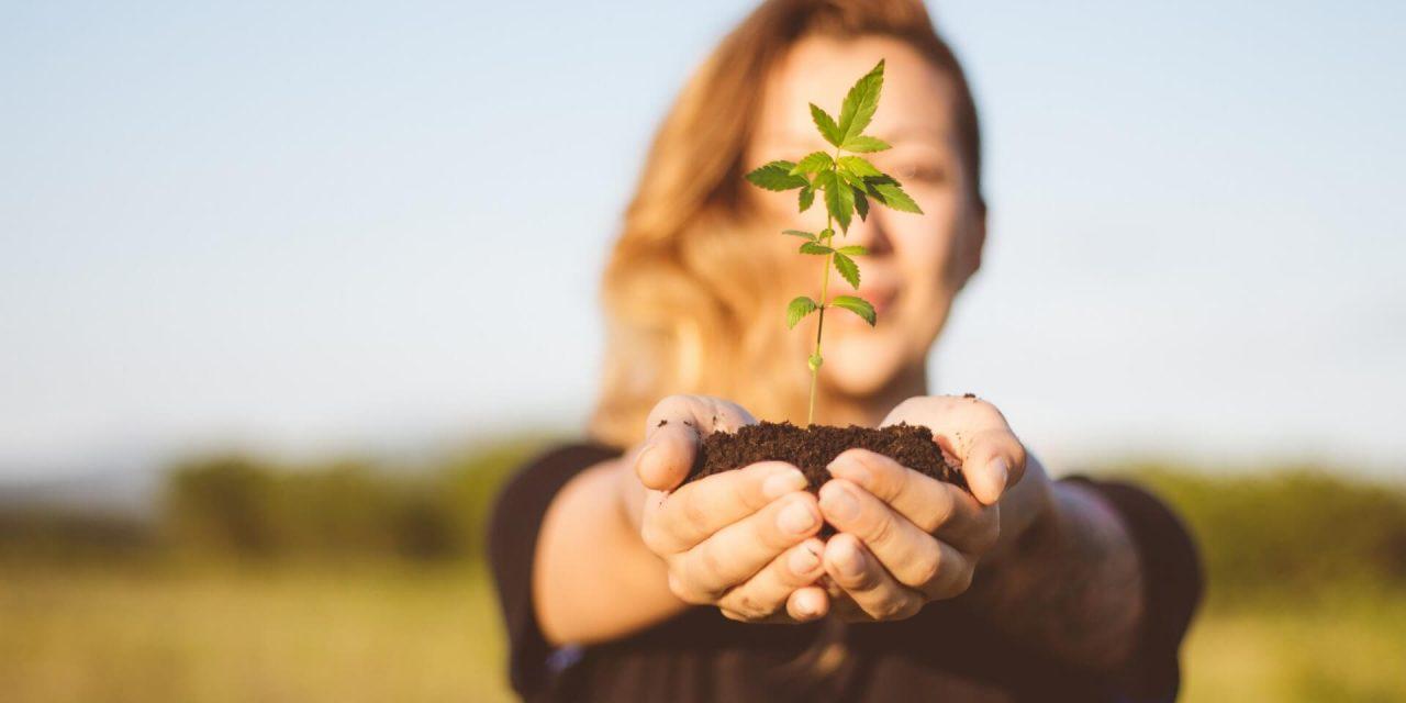 Kannabisz történetek a szekrény mélyéről