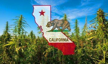 Kiszorítják a dílerek a legális kannabiszkereskedőket Kaliforniában!